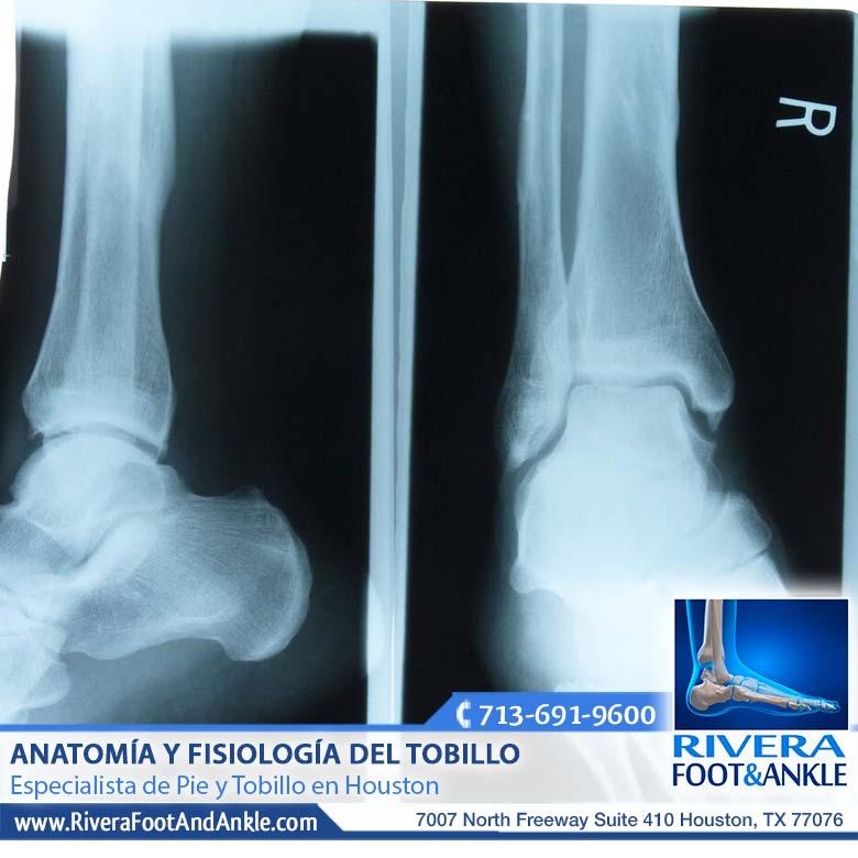 Anatomía y Fisiología del Tobillo - Rivera Foot and Ankle